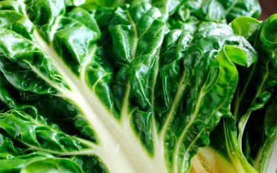 ¿Se puede congelar la espinaca (cruda o fresca)?